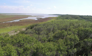 Friends of the Wild Whoopers Whooping crane winter habitat on Aransas NWR, Texas  photo by USFWS