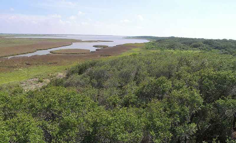 Whooping crane winter habitat on Aransas NWR, Texas photo by USFWS