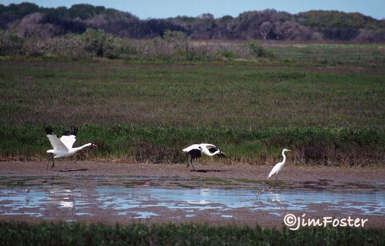 Fresh water is necessary for a healthy environment on Aransas National Wildlife Refuge.