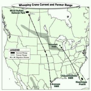 Whooping crane current-and former range and migration route