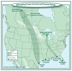 Whooping Crane current and former range and migration corridors.
