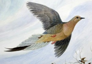 "passenger pigeons Detail of Martha from ""Martha, The Last Passenger Pigeon"" by artist John Ruthven. The painting has been made into an ArtWorks project mural to mark the upcoming centennial anniversary of the extinction of the passenger pigeon. Martha, the last pigeon died at the Cincinnati Zoo on September 1, 1914. The Enquirer/Glenn Hartong."
