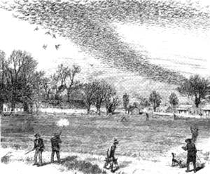passenger pigeons Figure 2. Unregulated hunting and massive habitat destruction caused extinction of the passenger pigeon.