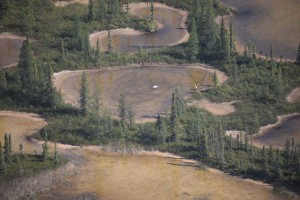 Whooping Crane habitat on Wood Buffalo National Park.   photo by Jane Peterson WBNP
