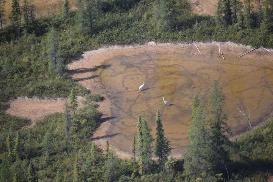 Whooping crane nesting area at Wood Buffalo National Park.