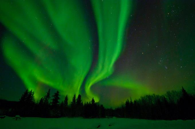 Whooping cranes and the aurora borealis - Friends of the