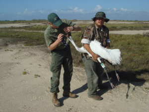 "Felipe Chavez-Ramirez, PhD, ""Whooping Crane Science Advisor for FOTWW doing field research."