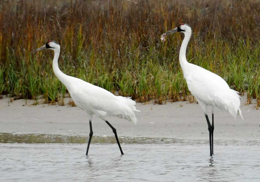 bays and coast <strong>Texans have demonstrated that we can kill a bay, or at least severely harm it and the animals that depend on it. In 2013, a federal judge ruled that Texas water officials' management harmed San Antonio Bay, leading to the deaths of 23 whooping cranes. Pat Sullivan/STF</strong>