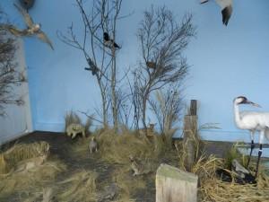 "Luseland Museum Whooping Crane ""Nature Preserve"" Exhibit."