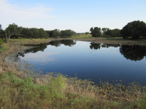 """Friends of the Wild Whoopers. """"Stopover"""" wetland pond on Texas Army National Guard Camp Bowie. FOTWW-GCBO classified this pond to be in excellent condition currently."""