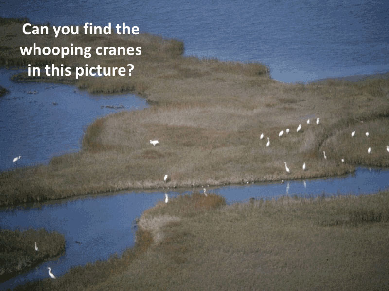 Counting Whooping Cranes