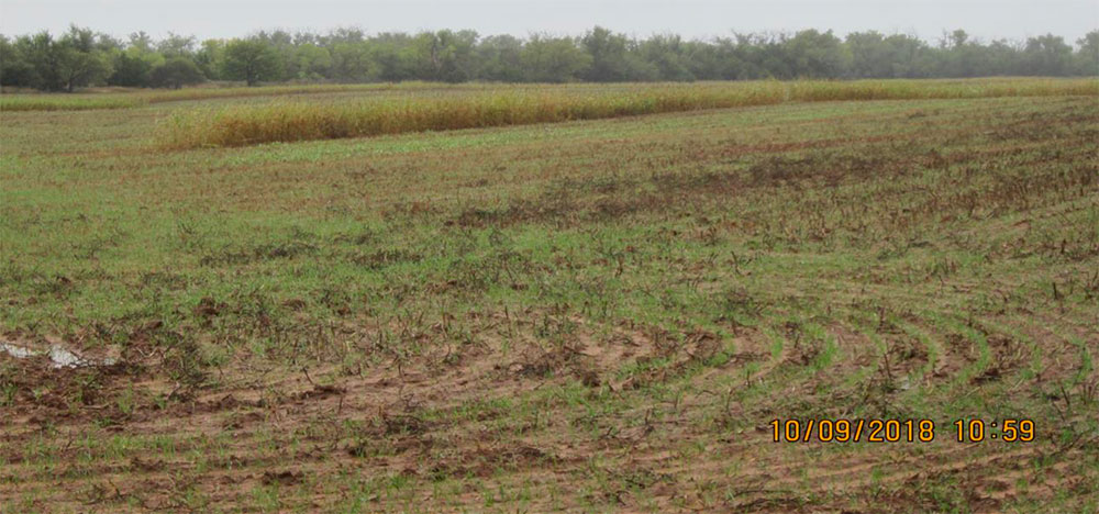 Fort Supply Lake, Oklahoma. Figure 5. ODWC operates the wildlife management and hunting programs on 5,418 acres ofFort Supply Lake. This photo illustrates one of their 21 food plots on the lake property. Whooping Cranes will forage for grain and insects in such plots.