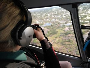 whooping crane survey